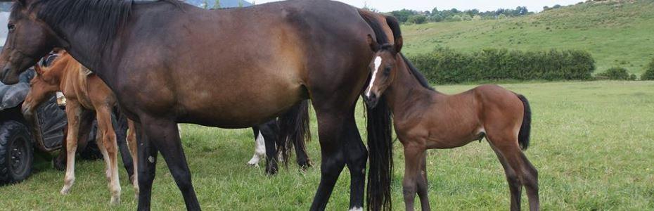 Foal No 16
