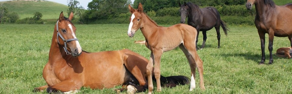 Foal no 12