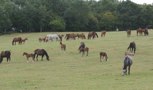 foals on hills